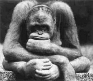 pensatore scimmia